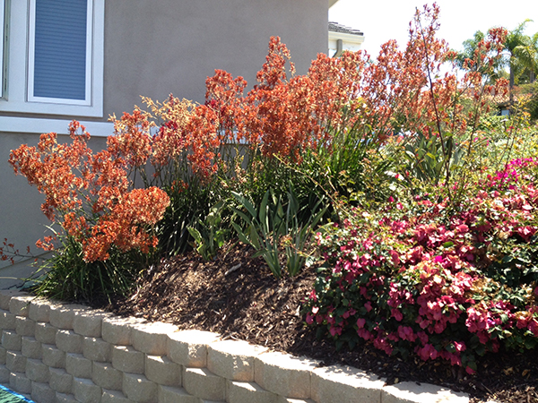 Residential Retaining Wall San Diego