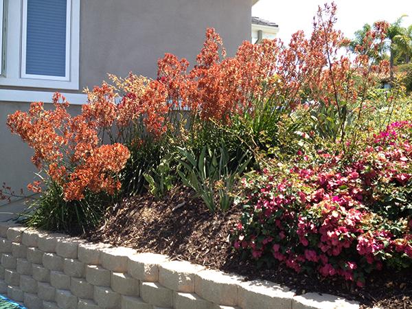 Residential Retaining Wall San Diego