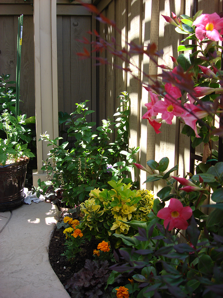 San Diego Garden And Landscaping